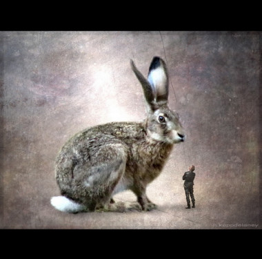 rabbit, big
