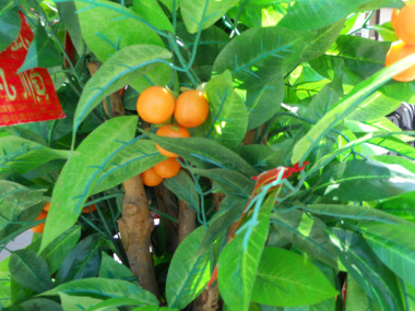 Funky Orange Fruit Tree